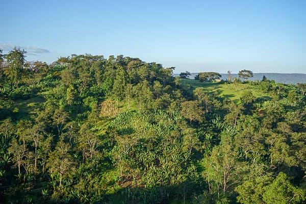Kayon Mountain Estate Natural