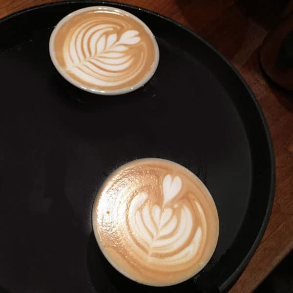 Springbok Coffee Lattes