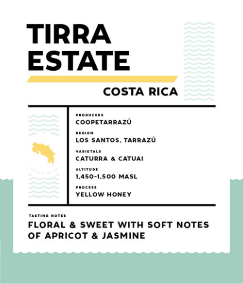 Springbok Coffee Tirra Estate